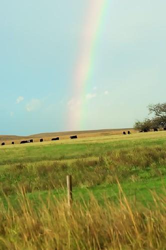rainbow 044