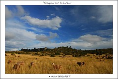 """Rajal del Guorp"" sur le Larzac (Michel Seguret) Tags: summer fab france color verde green nature colors landscape fun ancient nikon colorful flickr couleurs sommer vert ciel verano pro sensational grn fabulous michel t nuage paysage passe past atm colori naturesbest millau larzac stato causse mbp smrgsbord photographe aveyron midipyrenees occitanie seguret causses rouergue nikond200 thinkgreen 5photosaday ruralit amazingcapture francelandscapes diamondstars thisphotorocks mostbeautifulpicture internationalgeographic anticando worldtrekker checkoutmynewpics cielnuage colourvisions grandscausses flickrverte naturallymagnificent momentdimagination croquenature mundorstico mbpictures mostbeautifulpictures michelseguret mondorustico"