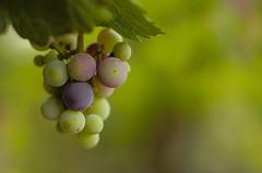 Lefty Grapes