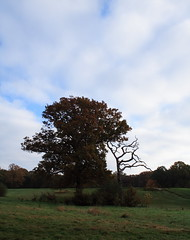 Autumn (farmerytwang) Tags: southampton common