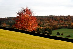 Autumn sun (Dean Ayres) Tags: autumn orange brown tree green fall grass surrey copper polesdenlacey outstandingshots