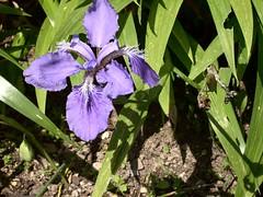 ortobotanico 181 (blum1) Tags: alberi fiori piante ortobotanico