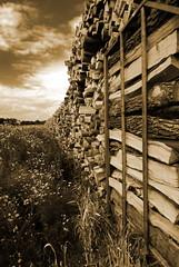 Irgendwo bei Telgte DSC_5088 (lychee_vanilla) Tags: wood travel nature landscape westfalen abigfave thegalleryoffinephotography