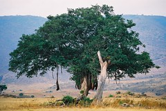 F1030002 (Ana Paula Hirama) Tags: africa tanzania unesco ngorongoro worldheritage masaimara frica qunia