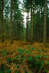 Woodlands  -  Warren