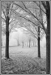 Fog, ice and trees (Alex Verweij) Tags: trees winter mist snow cold ice alex fog sneeuw nederland lonely flevoland 2007 almere ijs koud vriezen canon400d superbmasterpiece diamondclassphotographer coolestphotographers