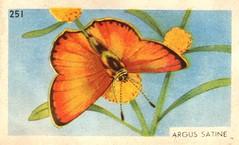 papillon 07