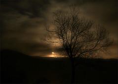 tree at moonlight / a la llum de la lluna (Ferran.) Tags: trees moon nature natura catalonia luna moonlight pyrenees lluna ripolles queralbs elpuig