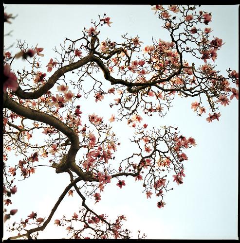 Li Po wei notte di primavera