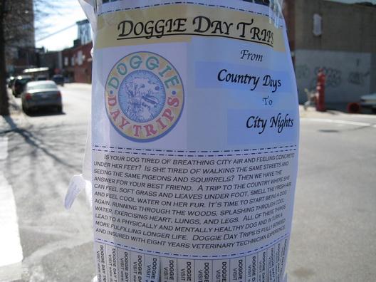 Doggie Day Trips