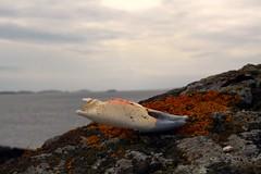 Krabbeklo (VirumPhoto - Svein J Lindstad) Tags: norway island hordaland tkk krabbe fedje krabbeklo bildekritikk lindstad tnsbergkameraklubb
