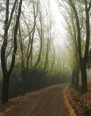 road to the mist (rpiker101) Tags: autumn fall fog highlands australia victoria daylesford centralvictoria mywinners aplusphoto auselite