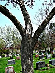 Enfin libr (Pierre thier) Tags: trees paysage homme visage supershot figuratif treesubject artfiguratif top30green bestshotaward thebeautytrees