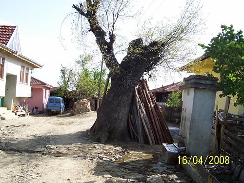 garib bir ağaç