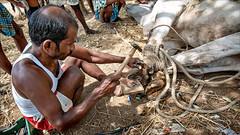 The Blacksmith • Madurai - Vilampatti (Henk oochappan) Tags: 2007 madurai oochappan travel dindigul vilampatti saarc asia tamillifeculture dravidian canon eos canoneos5d tamilnadu tamil southindia india indianphotography tamilnadumen tamilmen tamilman img0977
