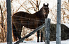 Northern country horse (NetReacher Imagery) Tags: horse horses equine equines