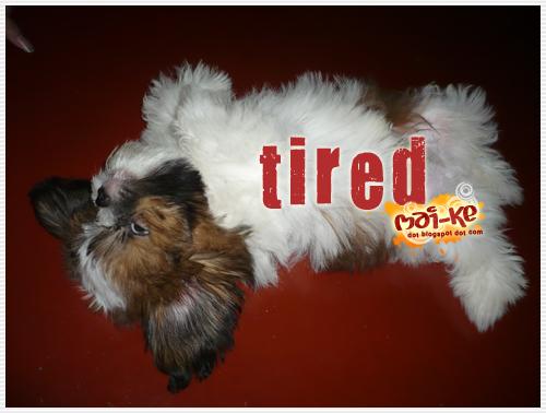 Benji_tired