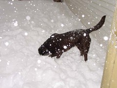 Dakota: Snow Search for Lost Toy