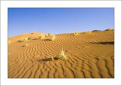 Textures (G u i d o) Tags: desert namibia guido namib flickrchallengegroup flickrchallengewinner