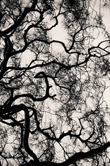 (Alan Wentworth) Tags: tree japan garden temple kyoto patterns branches explore nihon myflickr rememberme asatimeofday