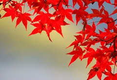(nobuflickr) Tags: autumn nature japan kyoto uji naturesfinest blueribbonwinner