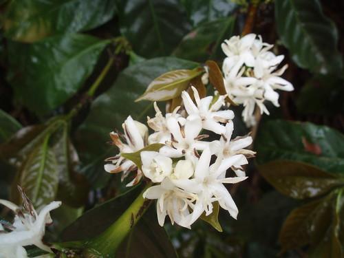 Florada