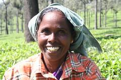 IMG_4250 (HAKANU) Tags: portrait woman plants india mountains geotagged tea kerala westernghats munnar teaplants teaplantations teapicker pickingtea teapicking thewesternghats