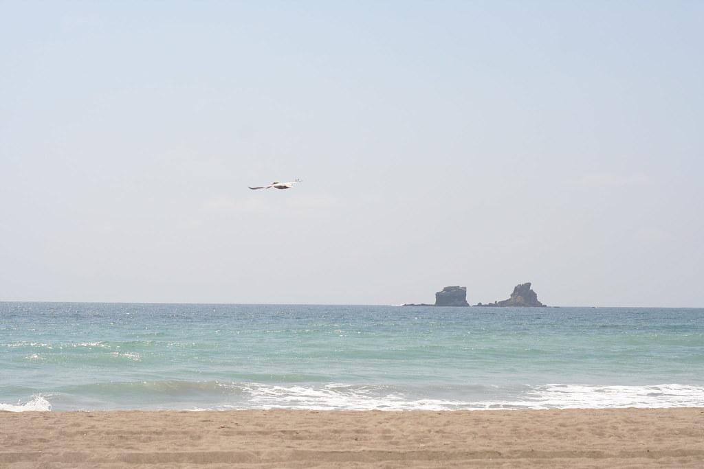 pelican and islands