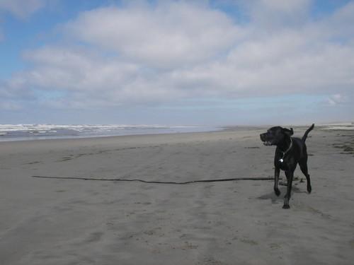 A seaweed huntin