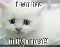 i can haz in flyte meal? ((     )) Tags: cat funny lol can has cheezburger lolcats lolcode