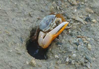 Crab-P1050681
