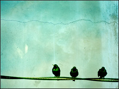 Sky is Falling (Dave Delay) Tags: texture birds artisticexpression flickrsbest mywinners life~asiseeit