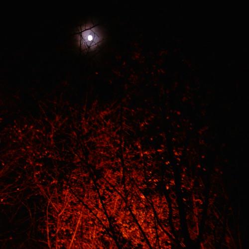 【写真】Moon [ Kiyomizu-dera / Kyoto ]