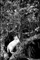 (Bruce  Chou) Tags: cat pentax taiwan taipei    dfa100mm k10d