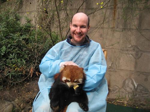 Nepalese red panda