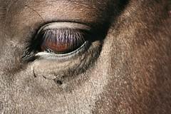 Solo labor (renata-twist) Tags: horse animal caballo galope