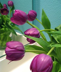 tulips looking in the mirror (SmartAnnie (Away)) Tags: purpletulips overtheexcellence theperfectphotographer ourturquoisepowderroom