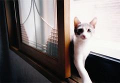 (renewdays) Tags: animal cat lomo lomolca filmcamera