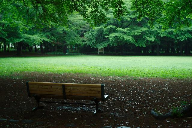 雨中の公園