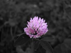 Violet (alt-os) Tags: contrasto pianteefiori fotosperimenti