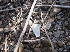 FlyingTigers 356 (SixbyFire) Tags: archaeology plane airplane flying san crash aviation tiger flight super line lockheed pacifica bruno constellation 282 wreckchasing