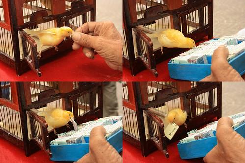 The luck bird