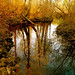 My Wild River … Nature!!! - by Denis Collette...!!!