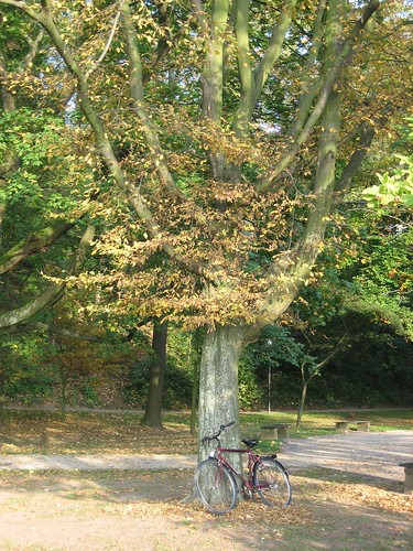 Tree and bike
