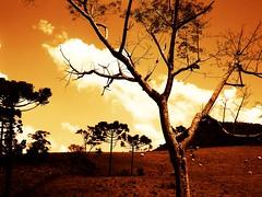 rvores em Spia (Fbio P.S.) Tags: color tree paran brasil zoom great rvore 1000views spia 10000views 100faves 10faves olympusfe100 x710 fabiorosario rosriodoiva
