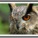 owl image, photo or clip art