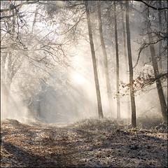 happy birthday Darwling! (anne makaske) Tags: wood trees holland forrest artistic expression utrechtseheuvelrug abigfave specialpicture betterthangood thewoodswherethepepmanroams theonlyhillinholland theonlysnowthisyear