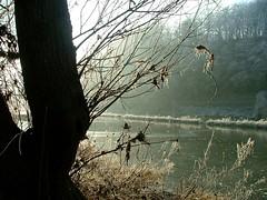 22.12.2007 (hippo1107) Tags: winter cold ice frozen kalt eis saar naturpark gefroren wiltingen altarm