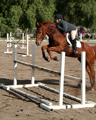 Wicked Sammy (xxmemorabilia) Tags: horse black english jump seat clip wicked german chestnut jumper hunter hop bound leap trop thoroughbred canter hunt paten sorrel warmblood trakehner samym