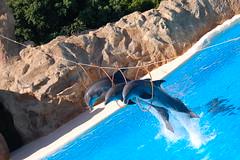 Delfines del Loro Park, Tenerife